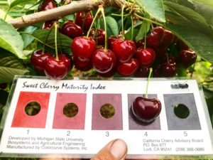 Cherry color chart